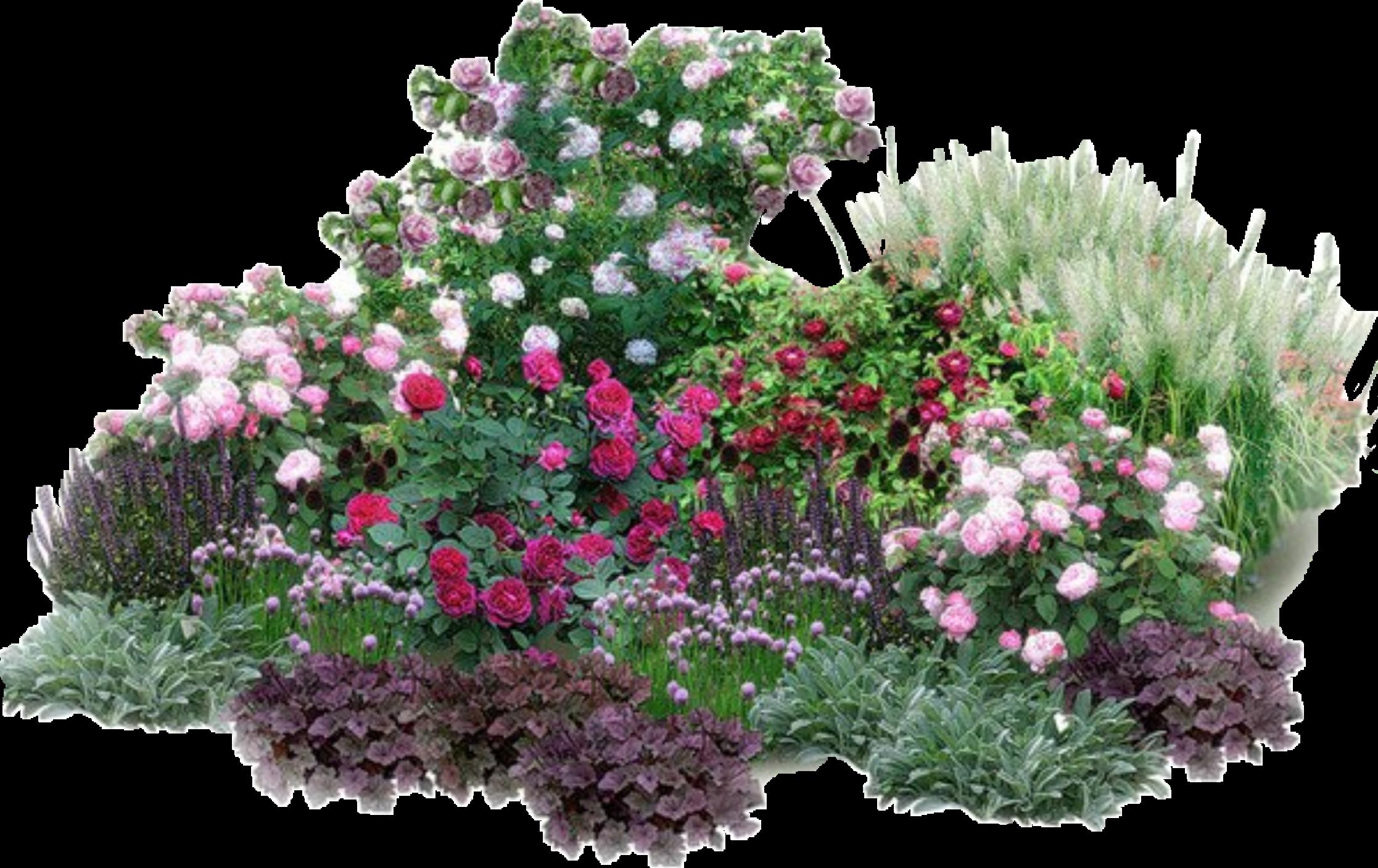 Как и с чем красиво высадить ирисы