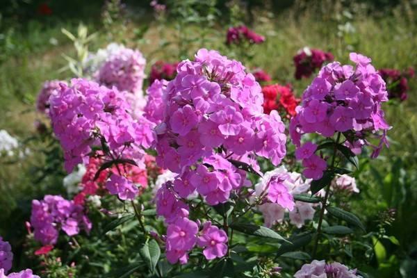 Чем подкормить цветы на даче весной, летом и осенью рецепты подкормок и график обработки