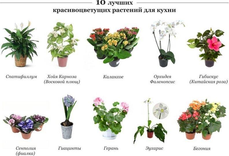 Растения, которые нельзя выращивать дома, в квартире, вредные комнатные цветы