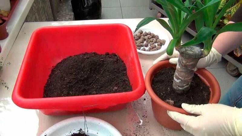 Как посадить алоэ: советы для начинающих цветоводов. выбор цветочной ёмкости