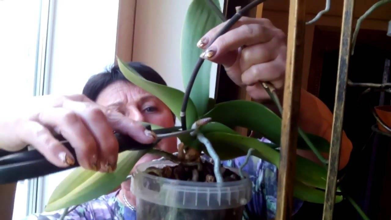 Размножение орхидеи в домашних условиях, все тонкости для новичков