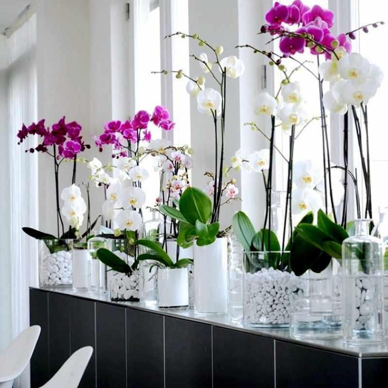 Приметы и суеверия про орхидею