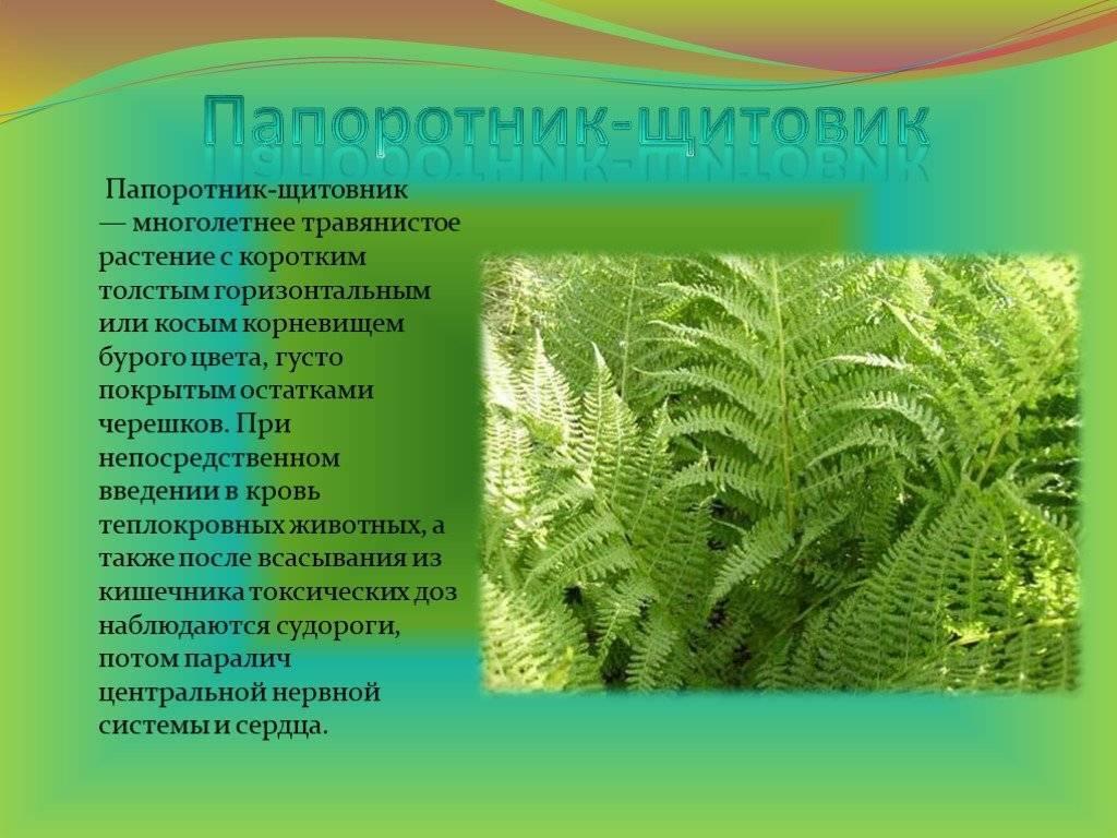Папоротник: виды и сорта, рекомендации по уходу