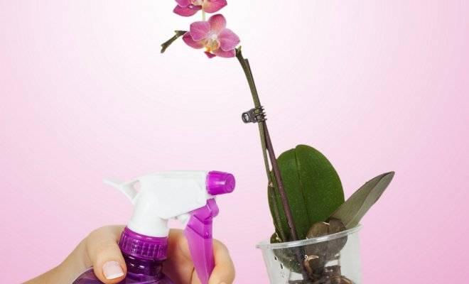 Чесночный водный раствор для орхидеи: примеры как правильно полить и приготовить