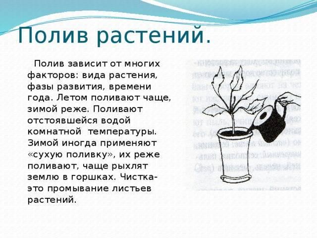 Как часто нужно поливать клубнику в открытом грунте
