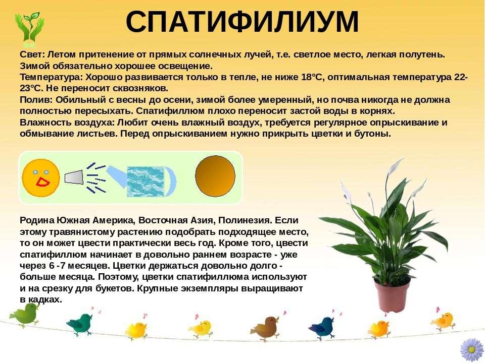 Светолюбивые комнатные растения (32 фото): описание солнцелюбивых цветов, которые любят жару и прямые солнечные лучи