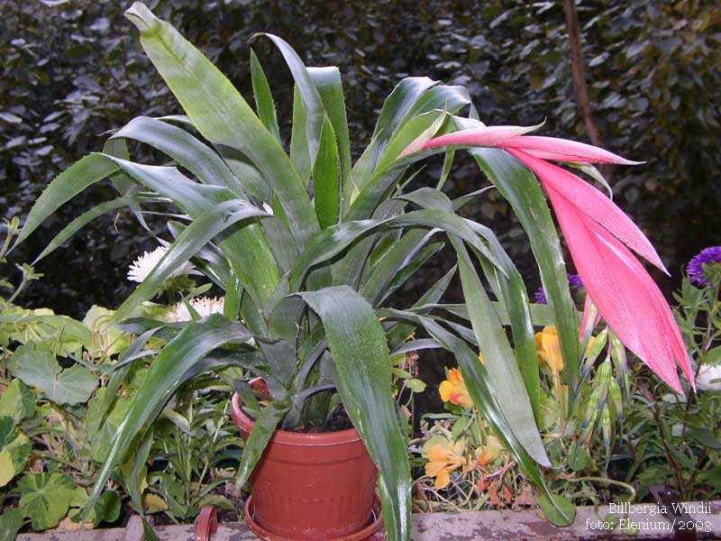 Комнатные растения с пестрыми листьями и их фото
