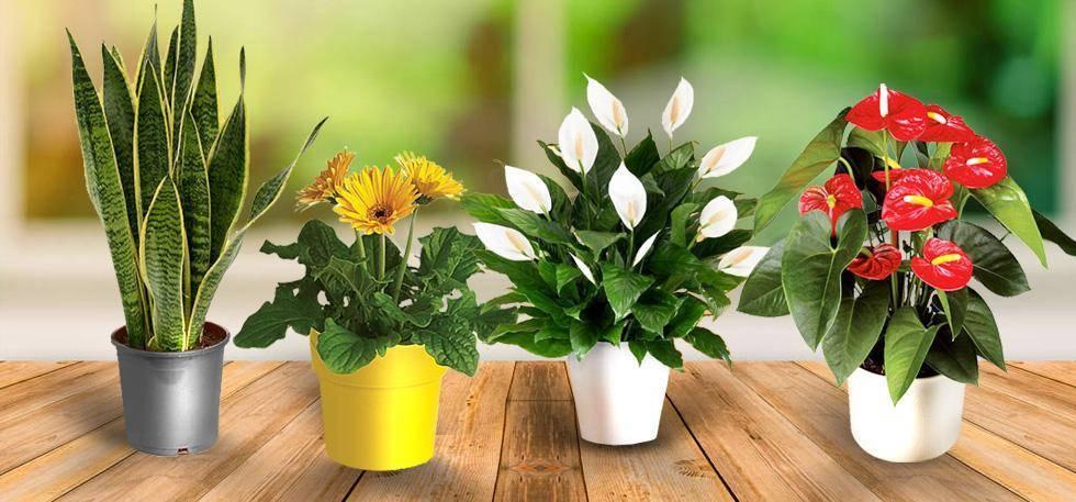 Уход за комнатными цветами: удобрения и подкормка для выращивания домашних растений, опрыскивание, обрезка и полировка