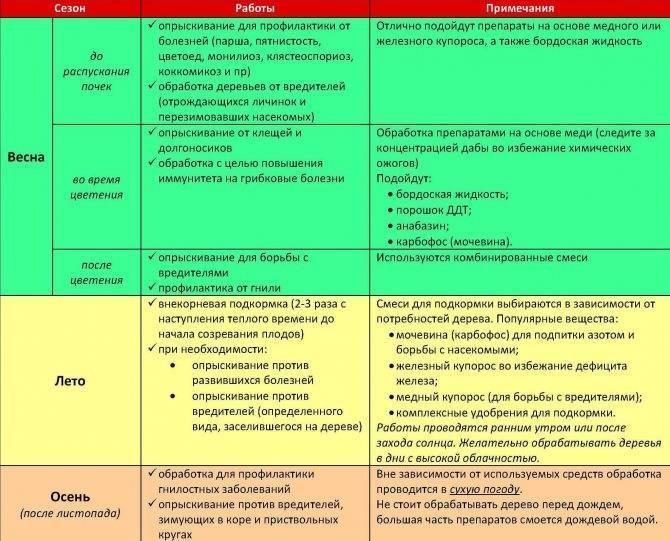 Болезни роз методы и средства для лечения и профилактики