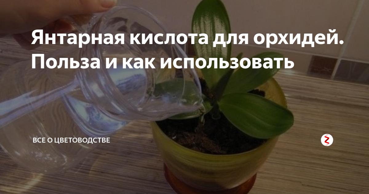 Использование янтарной кислоты для орхидеи: как разводить, подкармливать, протирать
