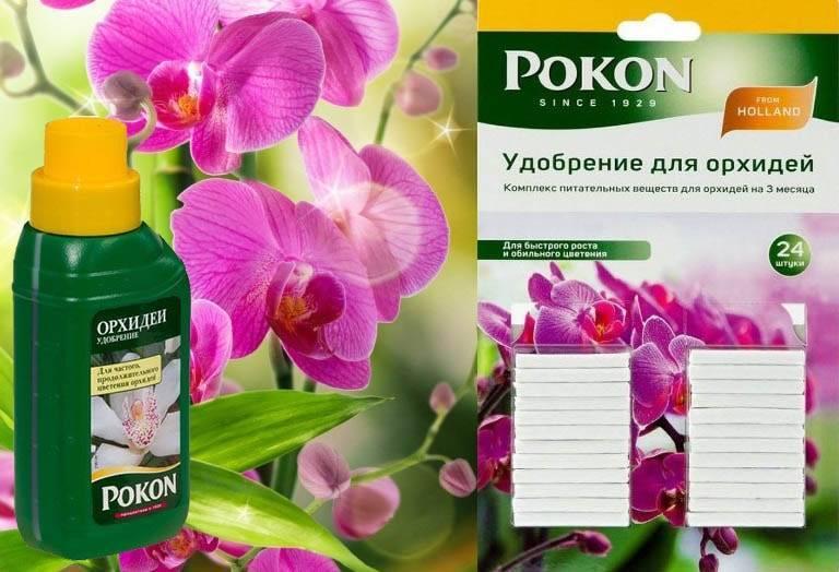 Виды удобрений, подходящих для орхидей, и способы их применения - orhibum.ru