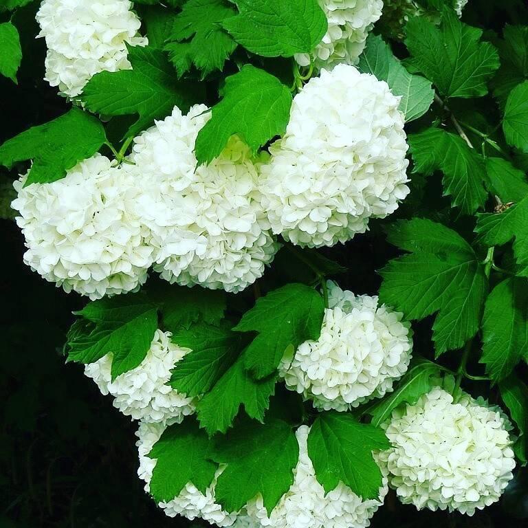 Горные растения: фото и названия горных цветов, растущих на камнях в горных областях