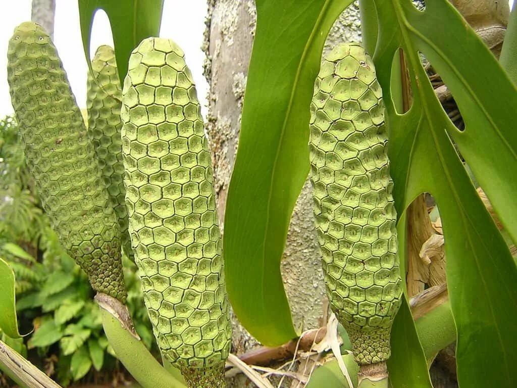 Где растет монстера в природе — родина растения