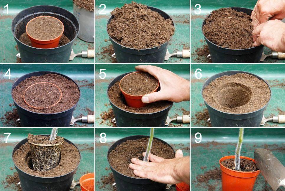 Выращивание бонсая из семян. практичные советы