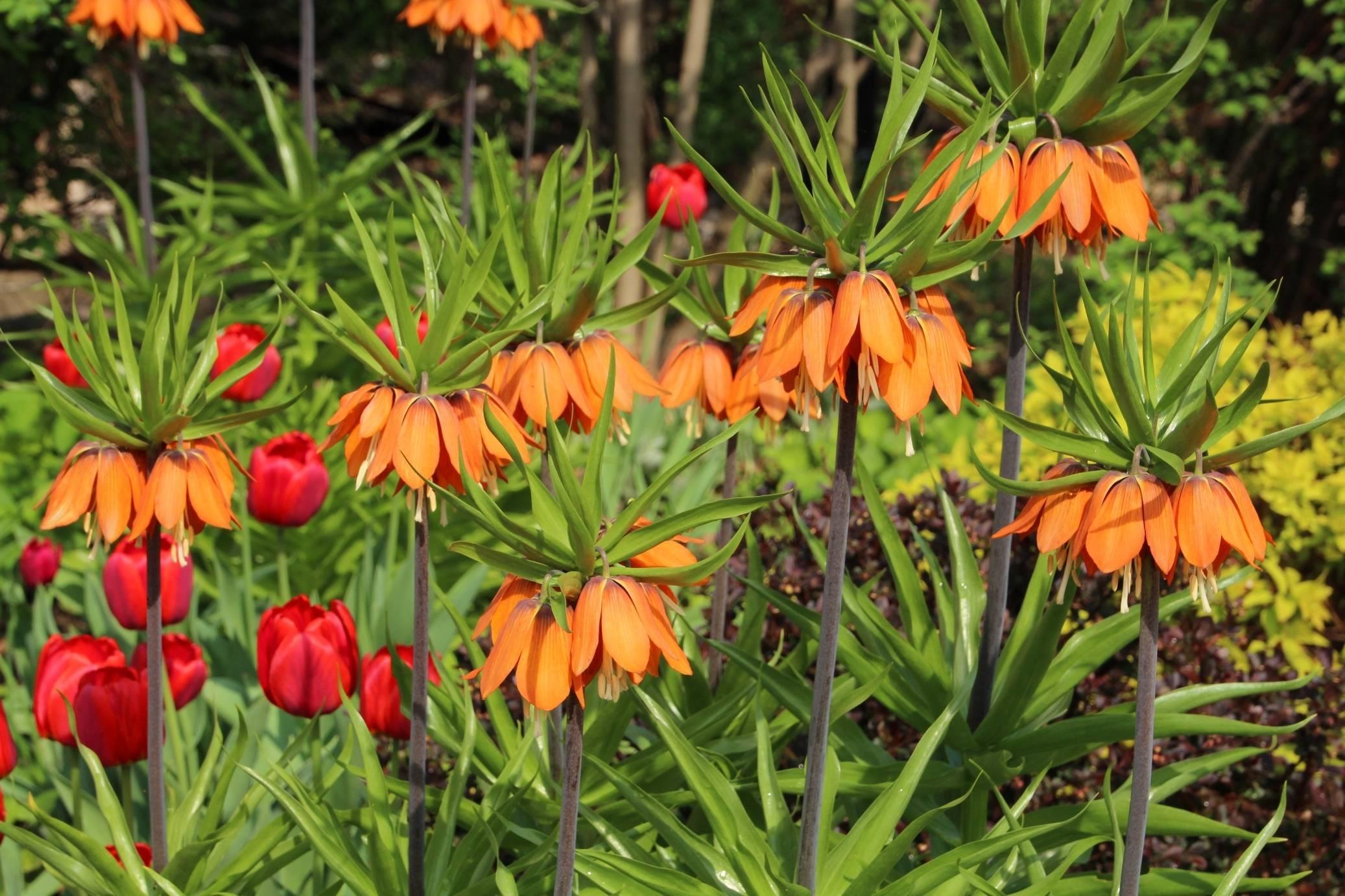 Как заставить каллу цвести в домашних условиях и в саду: почему плохо растут