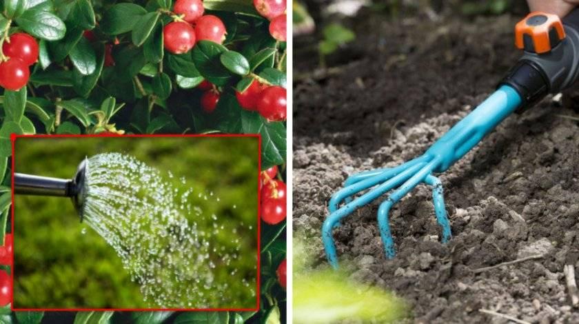 Барбарис тунберга: описание, особенности выращивания, популярные виды и сорта, способы и технология размножения, правила ухода