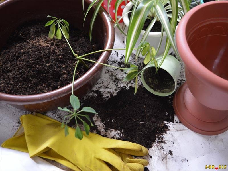 Благоприятные дни для пересадки комнатных растений