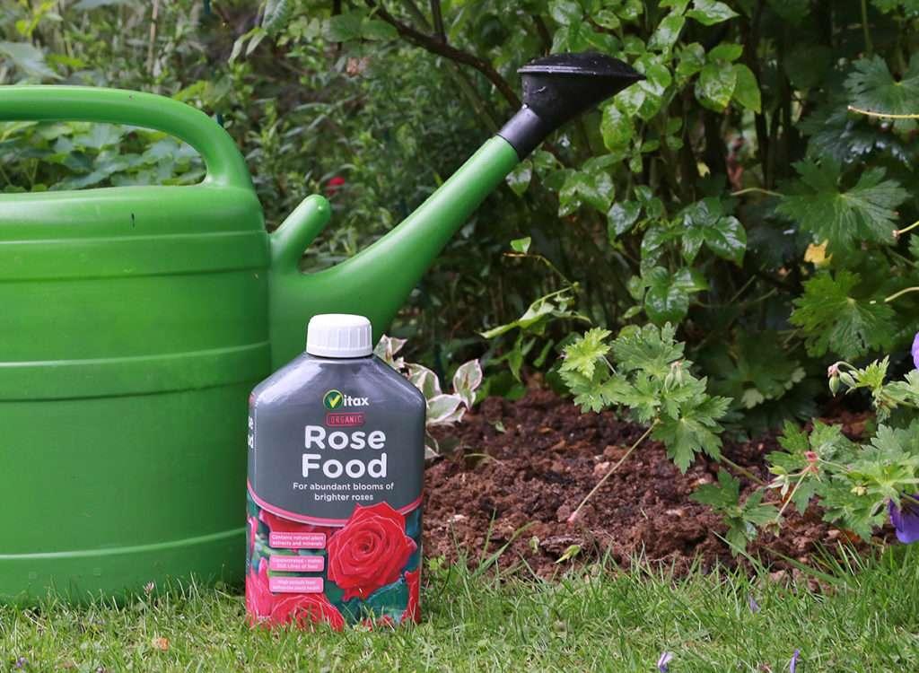 Чем подкормить розы для пышного цветения