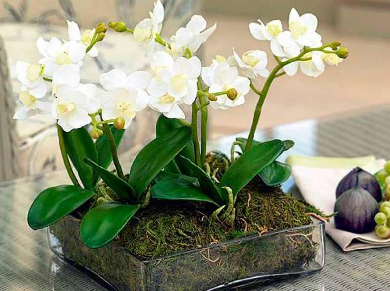 Лучшее удобрение для орхидей: подкормка в домашних условиях