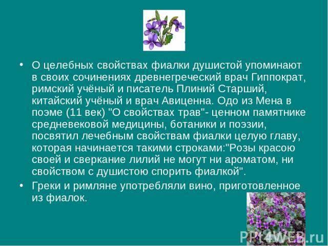 Фиалка трехцветная (анютины глазки): полезные свойства и применение