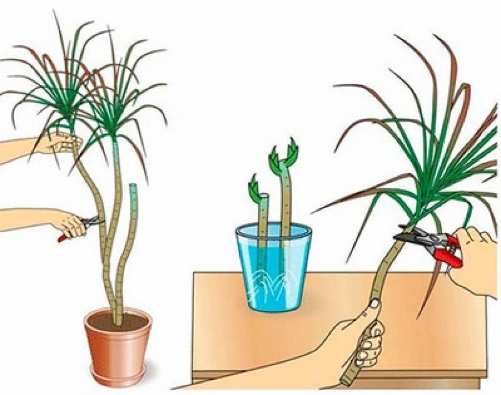 Неомарика шагающий ирис: уход в домашних условиях и примеры популярных сортов