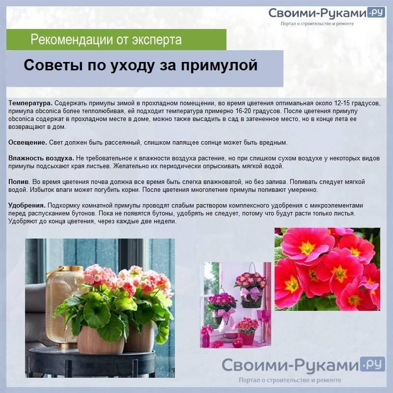 Размножение примулы: основные способы и примеры в домашних условиях