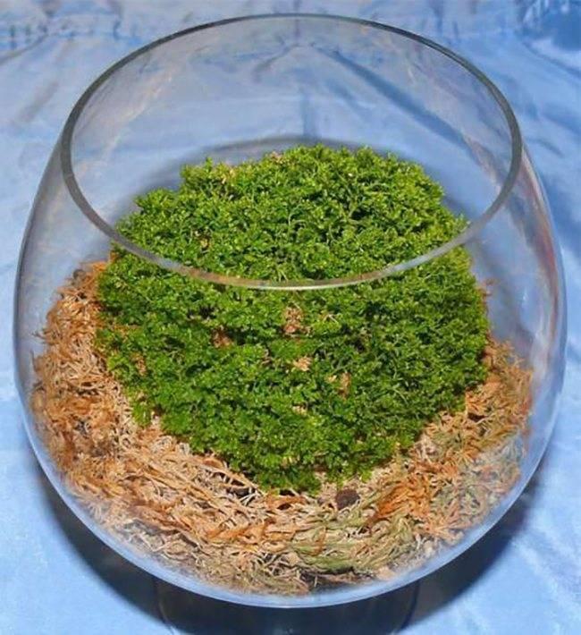Как ухаживать за иерихонской розой в домашних условиях: посадка растения
