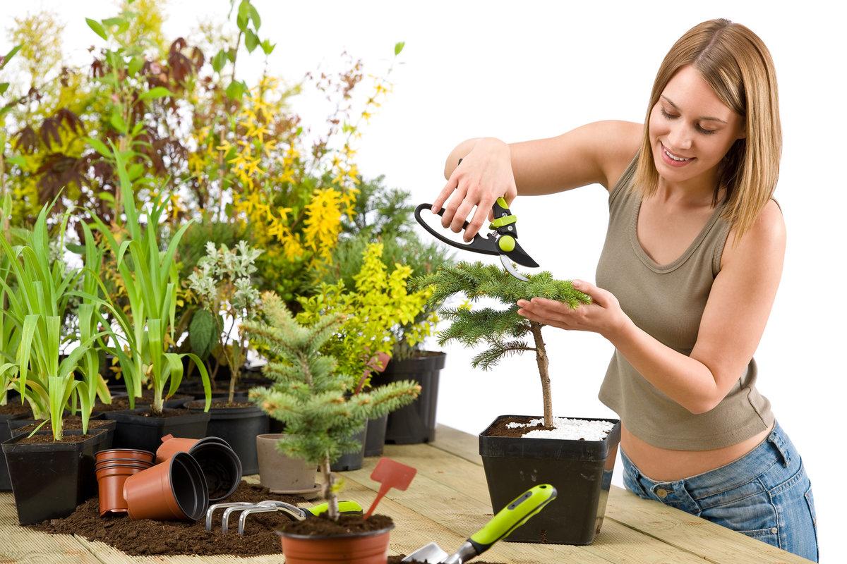 Уход за кроссандрой в домашних условиях. особенности выращивания кроссандры: полив, подкормка, размножение (+отзывы)