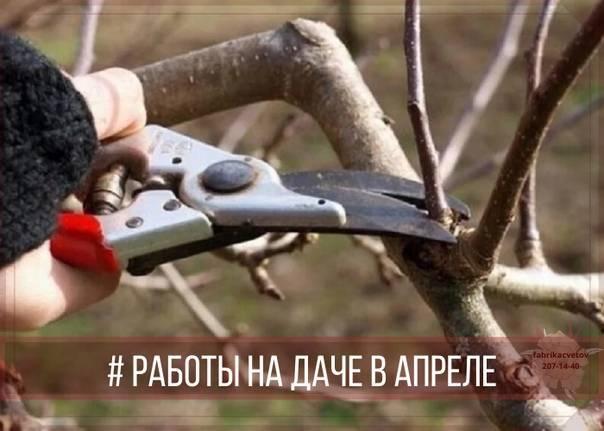 Секреты опытных садоводов: чем замазать спил на яблоне. советы по лечению коры.