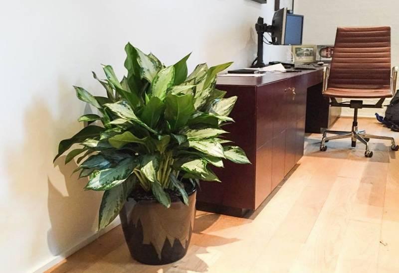 70 комнатных растений, очищающих воздух в квартире