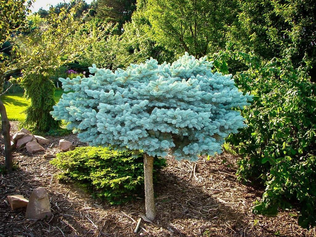 Самые необычные деревья и кустарники для сада