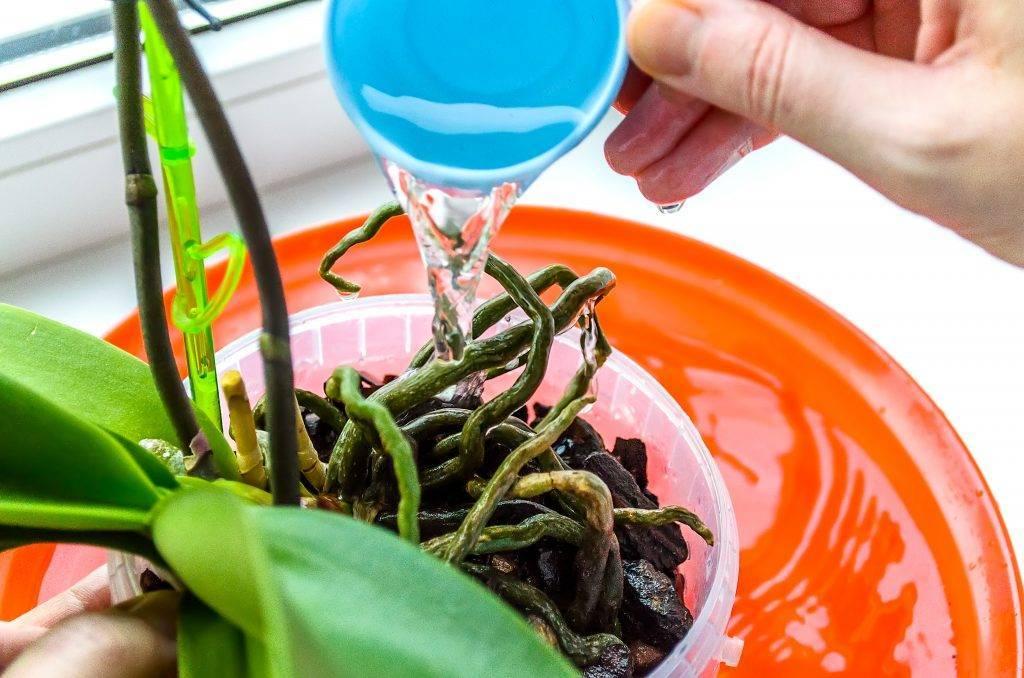 Как ухаживать за орхидеей после ее цветения, чтобы она вновь зацвела?