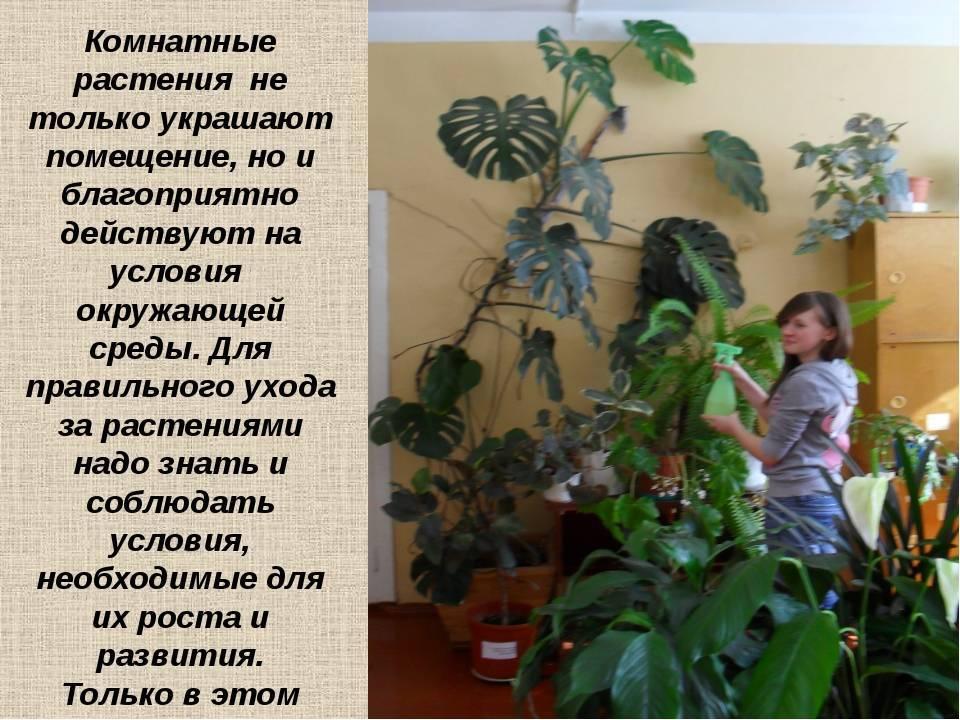 Комнатные растения, домашние цветы: уход за ними, выращивание комнатных растений
