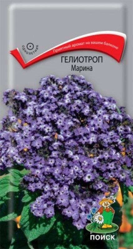 Гелиотроп цветок выращивание в домашних условиях
