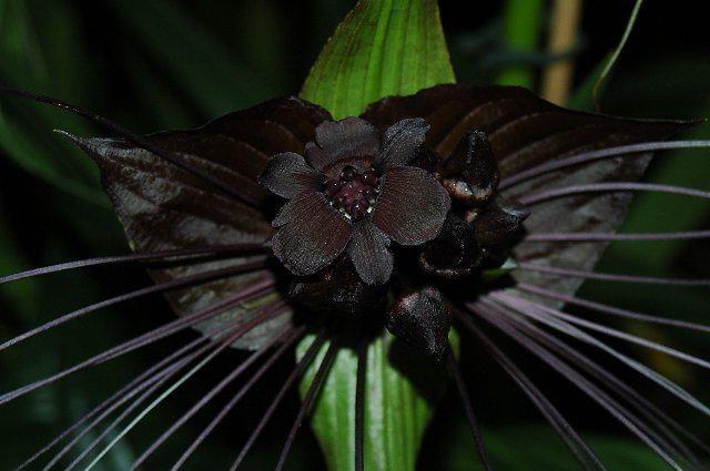 Необычные орхидеи: описание и фото растений с цветками оригинальной формы