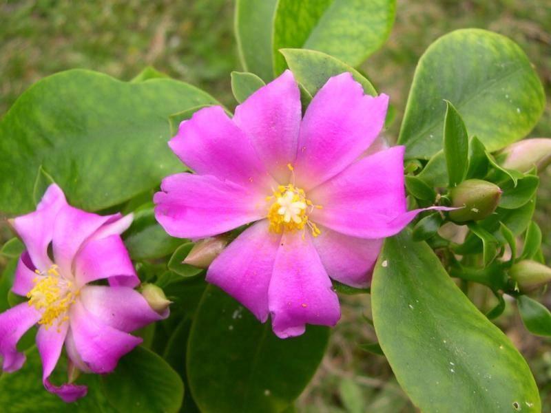 Варианты ухода за кактусом эхинопсис, примеры как заставить цвести и популярные виды