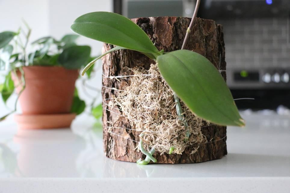 Субстрат для орхидей: основные требования к компонентам