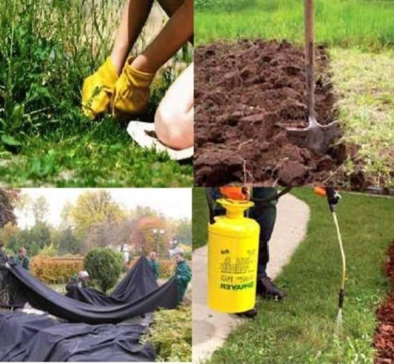 Как избавиться от вьюнка на огороде — современные и народные методы борьбы