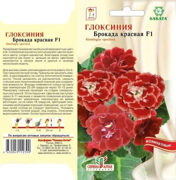 Глоксиния махровая: уход и выращивание дома
