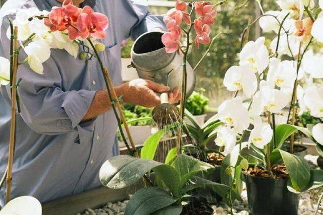 Сколько и как часто цветет орхидея: как продлить период цветения
