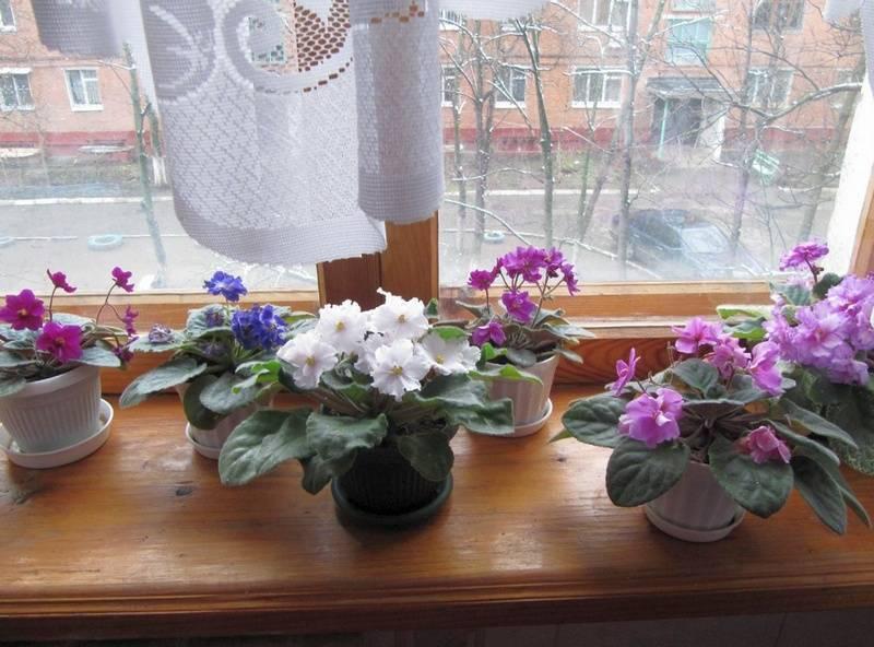Какие цветы полезно держать в спальне… « николлетто