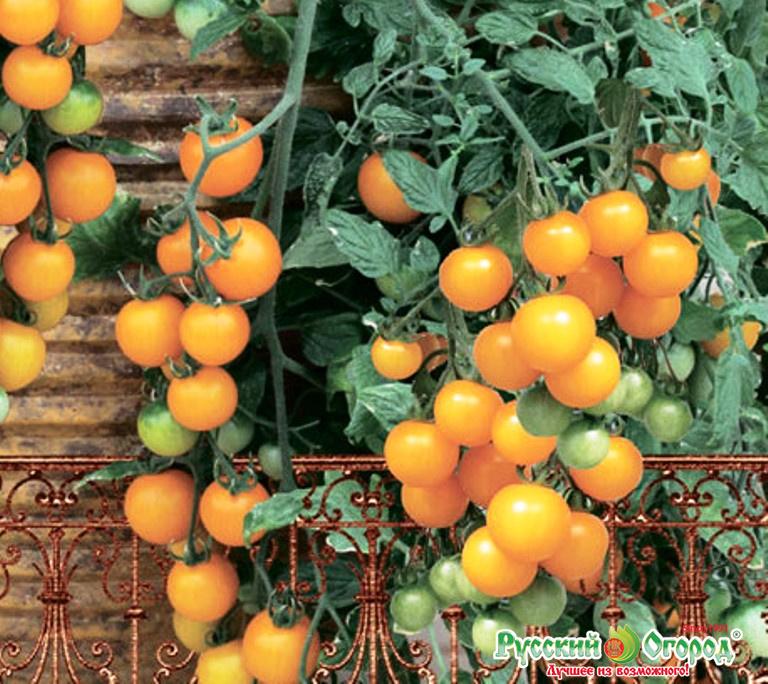 Томаты черри. лучшие сорта томатов черри. особенности выращивания маленьких помидорок