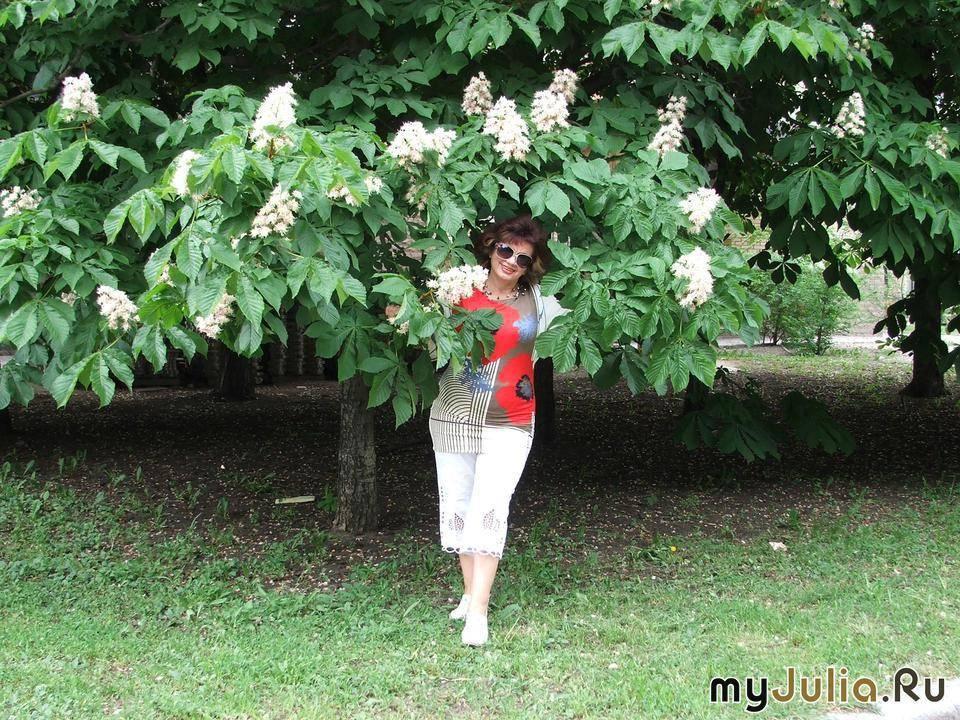 Как называется дерево на котором растут каштаны