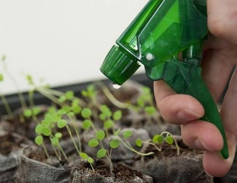 Выращивание вербены из семян: как и когда сажать на рассаду, ухаживать, пикировать