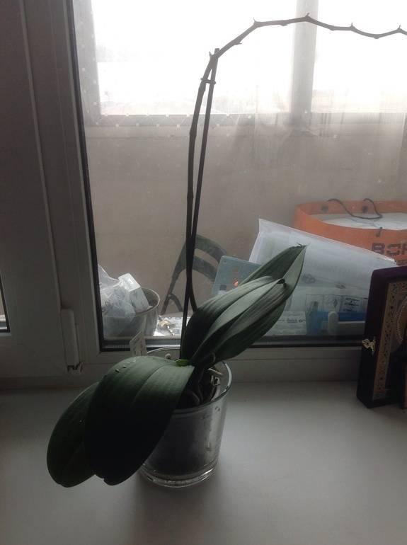 Инструкция, что делать, если у орхидеи опали цветы
