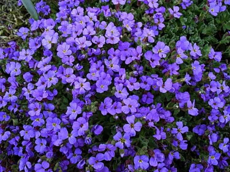 Почвопокровные розы цветущие все лето | красивый дом и сад
