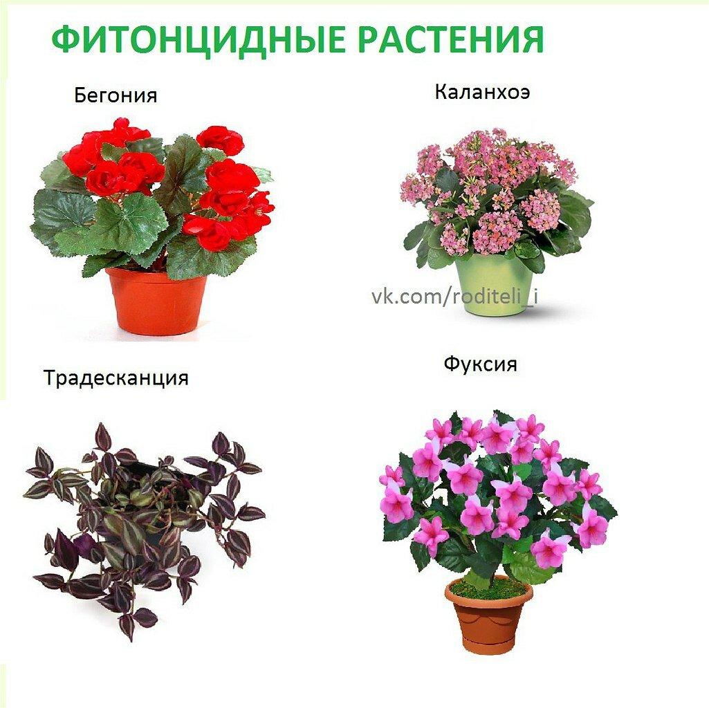 Названия комнатных цветов растений список с фото