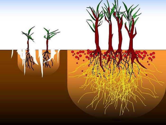 Если у орхидеи сгнили все корни — что делать?