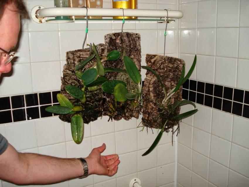 Полезные советы, как правильно осуществлять полив орхидей