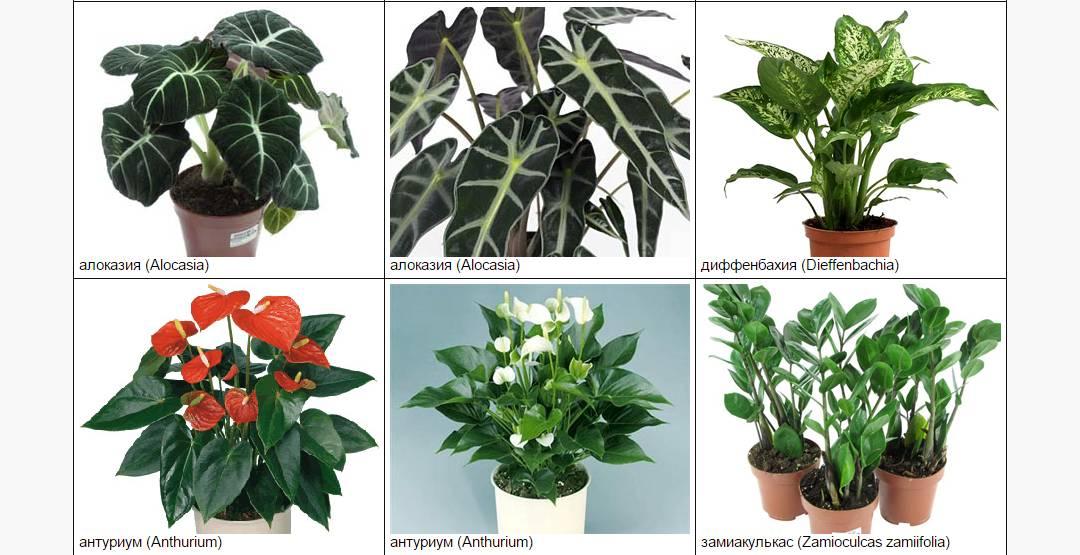обрешётке домашние цветы наименования и фото новому